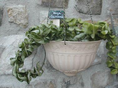 ardoises pour les plantes d 39 appartement les cactus les aromates la decoration du potager et. Black Bedroom Furniture Sets. Home Design Ideas